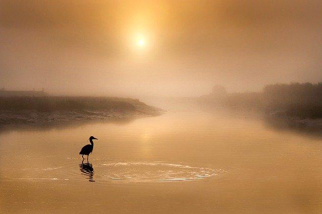 Grand héron dans l'eau au soleil brumeux.